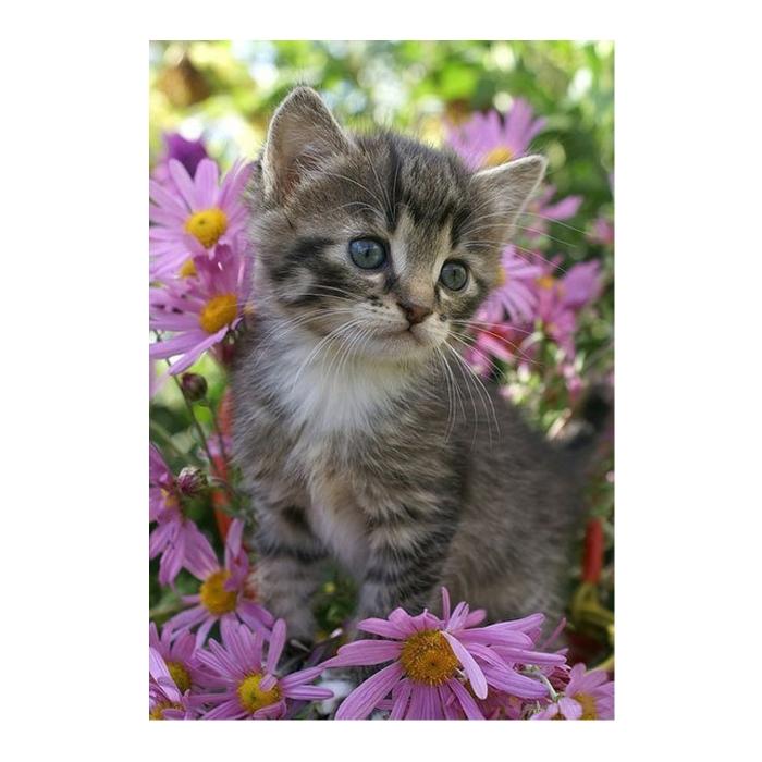 Картина по номерам с цветной схемой на холсте Molly арт.KK0605 Серый котенок (18 цветов) 30х40 см
